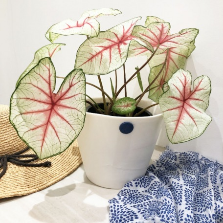 elephantom-design-flower-pot-white-3D-patterned-porcelain-handcrafted-creation-pyrenees